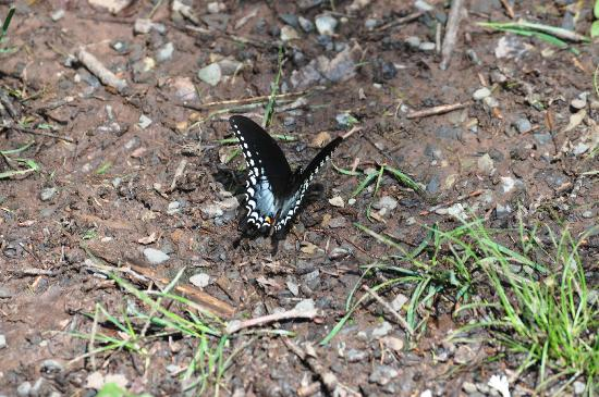 RoundStone Camping Resort: many species of butterflies
