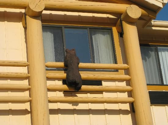 BEST WESTERN PLUS Holland Inn & Suites: Wooden Bear looking in our window from outside hotel