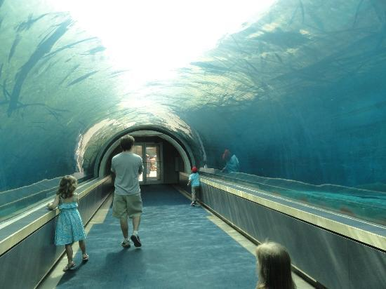 Walk Through The Ocean Picture Of Pittsburgh Zoo Ppg