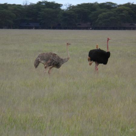Photos of Natural World Kenya Safaris, Mombasa