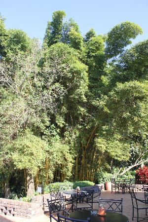 Protea Hotel Hazyview: The beautiful bamboo forest on the hotel grounds