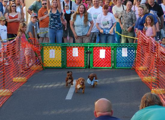 Pendleton, OR: Wiener Dog Races on Main St.