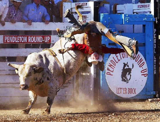 Let'er Buck at the Pendleton Round-Up