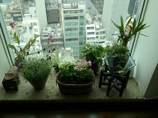 Cute Window In The Bar On The 16th Floor Picture Of Mitsui Garden Hotel Ginza Premier Chuo