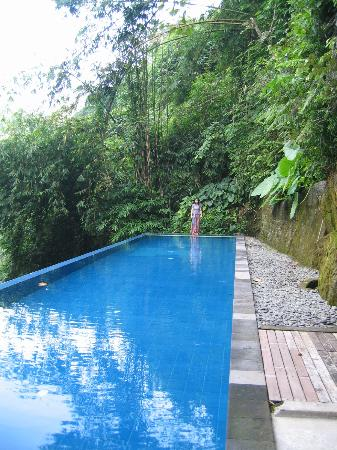 Natura Resort and Spa: Infinity lap pool valley jungle