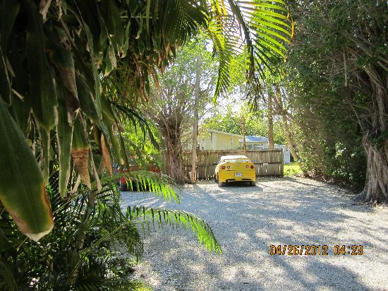 Seahorse Cottages: Parking area