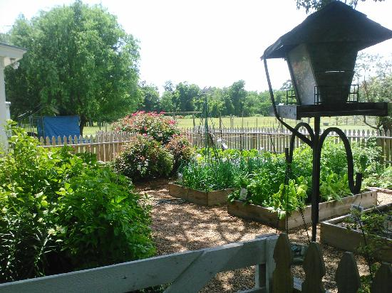 Springfield Bed and Breakfast: Mary's garden
