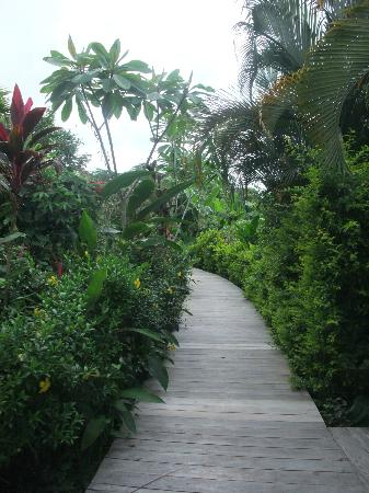 Casa Chameleon: Walkway to the rooms