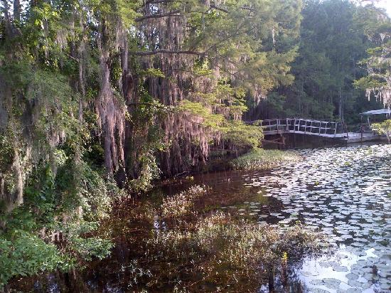 Mill pond clsp picture of caddo lake state park karnack for Caddo lake fishing report