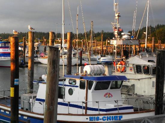 Sea Star Guesthouse: Bandon Harbor