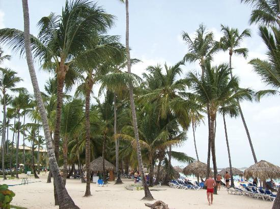 Grand Paradise Bavaro: Beach/palms