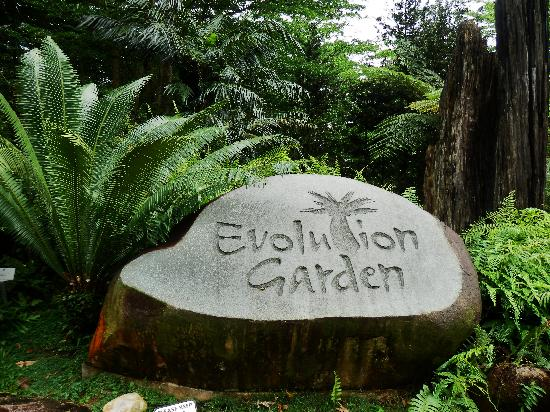 Within the evolution garden picture of singapore botanic for Au jardin singapore botanic gardens