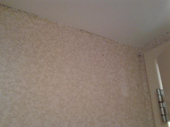 Quality Inn Tanglewood: mold in bathroom