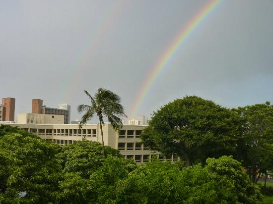 University of Hawaii at  Manoa Campus: A common sight