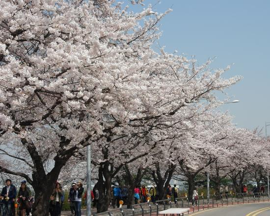 Photos of Yeouido Park, Seoul