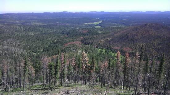 Black Hills: Looking out from Custer's Peak