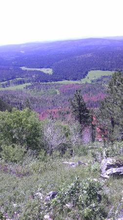 Forests of the Black Hills