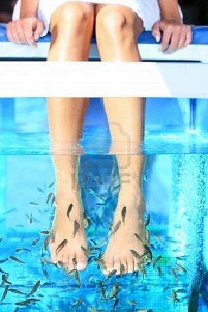 Guily fish spa bordeaux france address phone number for Fish pedicure price