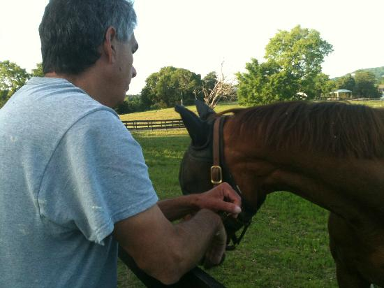 Inn at Walking Horse Farm: The visiting horses