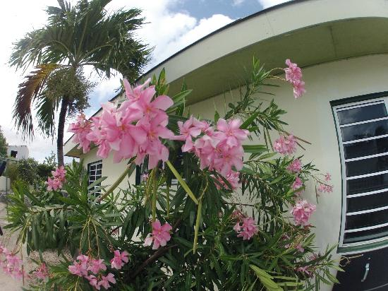 Bonaire Happy Holiday Homes: Pretty flowers