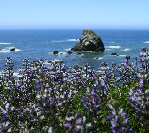 Bodega Bay, CA: WILD FLOWERS ABOUND