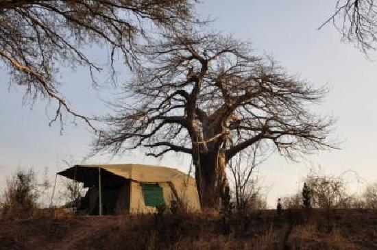 Authentic Tanzania Kilimatonge Wilderness Camp Ruaha