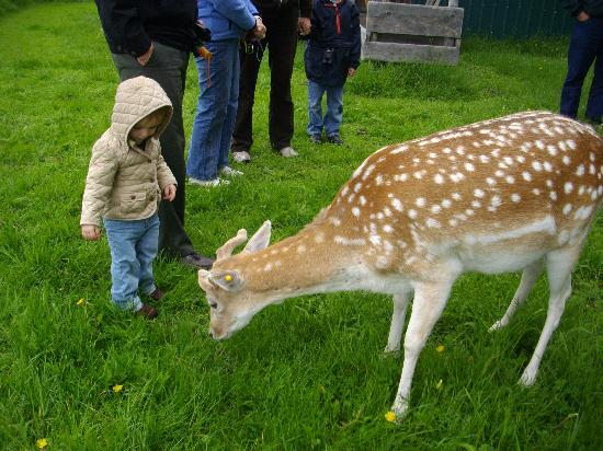 Ashley Inn: We took our grandkids to the Black Pine Deer Farm up in Donnelly, just 20 min. north of Ashley I