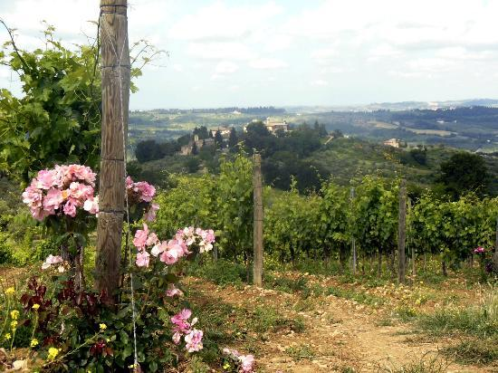 Casa Bini: The grapes growing, each has roses at the head