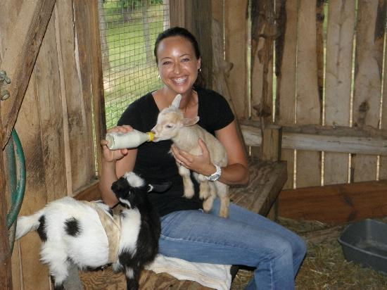 Cornerstone Farm: Bottle feeding baby goats