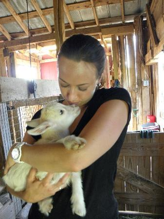 Cornerstone Farm: Baby Goat