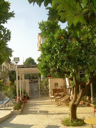 Villa Sorrento: orange tree and gate