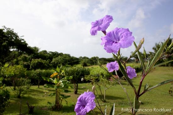 Great Escape: View at some of the most beautiful flowers found there