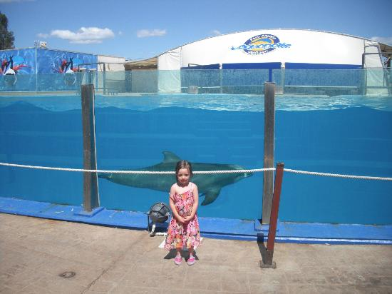 La Pineda, Spain: at the dolphin show