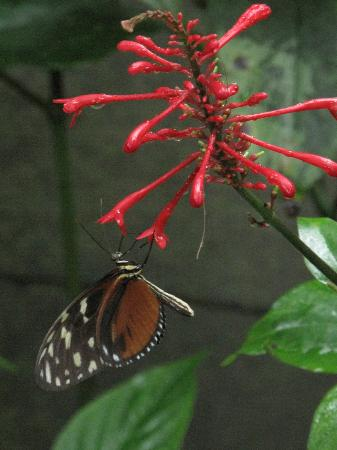 Mariposario Montezuma Gardens: Inside the butterfly garden