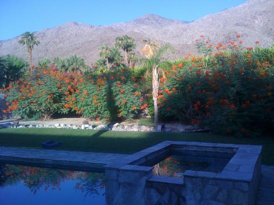 Triangle Inn Palm Springs: View from pool area