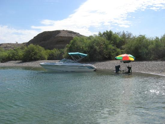Cabinsite bus in lake mohave picture of lake mohave for Lake mohave fishing