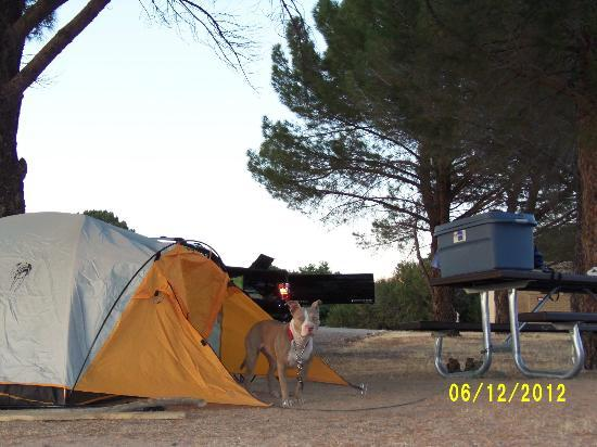 Mojave River Forks Campground