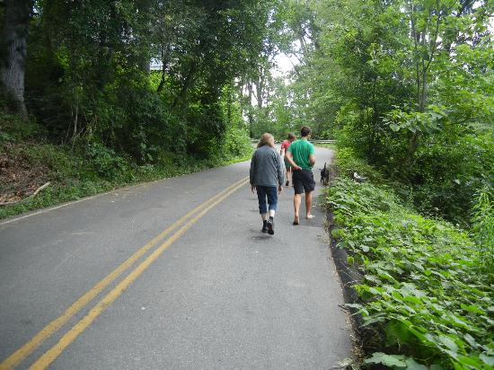 Asheville Swiss Chalets: Walking up the hill from the Beau cottage