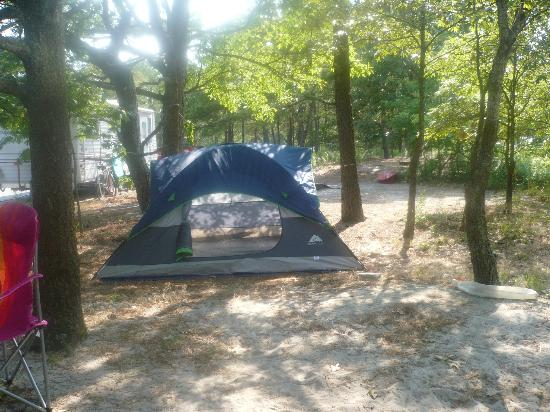 Cape Henlopen State Park Campground: smaller tent