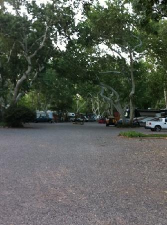 ‪‪Rancho Sedona RV Park‬: trees for coveted shade