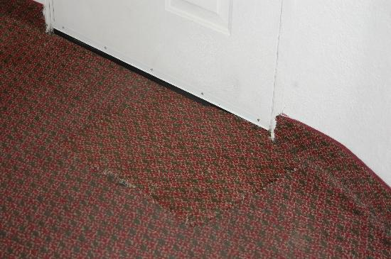 Quality Inn &amp; Suites Redwood Coast: One example of horrible carpeting.