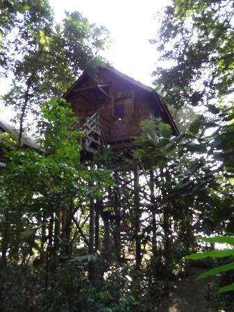 Permai Rainforest Resort: treehouse 9