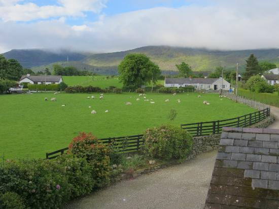Briers Country House: Sheep on the front yard