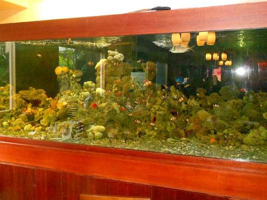 Mercure Batam: The hotel has two salt-water aquariums that are fascinating to watch. I see Nemo!