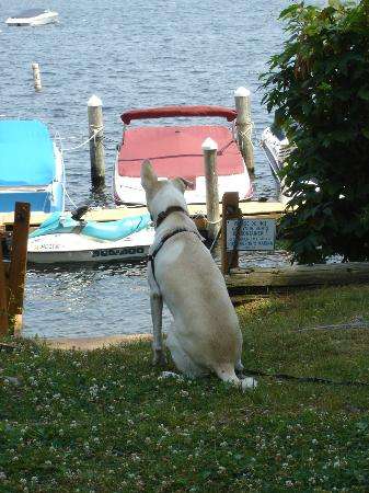 Sebago Lake Lodge and Cottages: Max looks out at the view just outside our cottage.