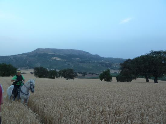 Illora, Spagna: Riding through corn fields