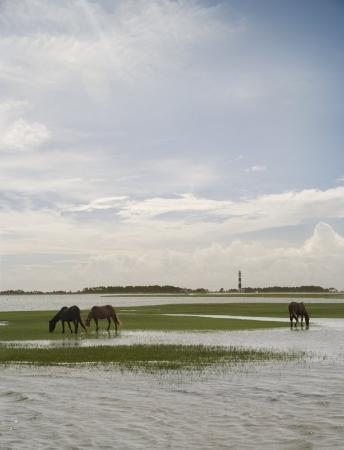 Quality Hotel: Crystal Coast Horses On Shackleford Banks