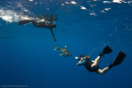 close encounetrs with an oceanic white tip on one whoa snorkeling one whoa 550x366