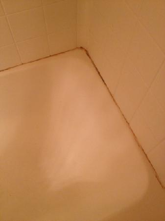 Extended Stay America - St. Louis - Westport - Craig Road: chronic mold and mildew