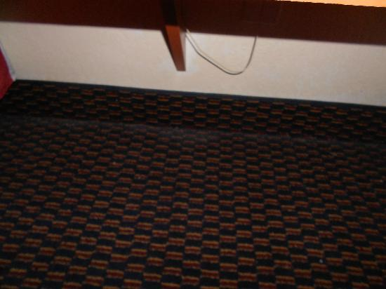 Microtel Inn: CARPET